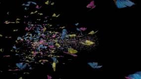 4K带通道蝴蝶飞散视频素材