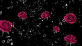 鲜花玫瑰泡在水里抽象镜头化妆品花镜头视频素材