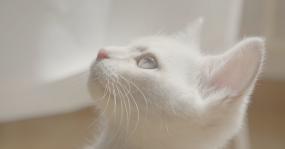 4k猫咪日常生活玩耍视频素材