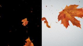 枫叶飘落循环透明视频素材