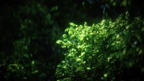 风中摇曳大树高清无缝循环树视频素材