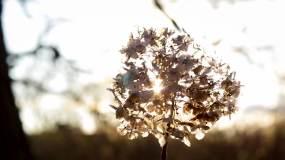 大自然树林阳光雨露水珠视频素材
