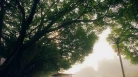 唯美校园大树情景剧舞台背景视频素材