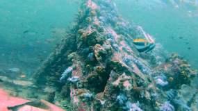 水肺潜水海底沉船水下鱼珊瑚鱼群视频素材