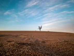 沙漠之树视频素材