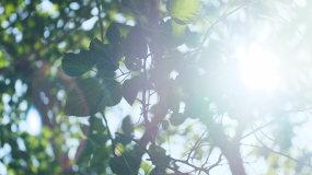 【原创】4K唯美树叶逆光空境视频素材