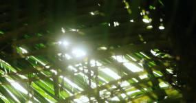 2K海南三亚椰子树螃蟹海浪视频素材