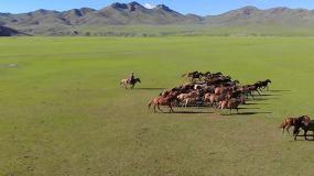 草原上奔跑的马群视频素材