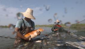 撒网捕鱼渔民丰收捞鱼视频素材