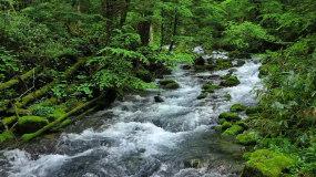 4k小溪森林航拍盛夏绿色植被西藏灵芝风景视频素材