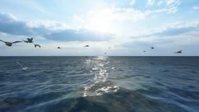 4K海面天鹅海鸥视频素材