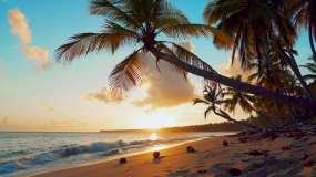 夕阳海滩棕榈树椰子树沙滩海浪视频素材