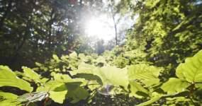 【4K】日出阳光穿透树叶大树视频素材