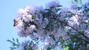1080P入春初开粉色樱花植物实拍视频素材