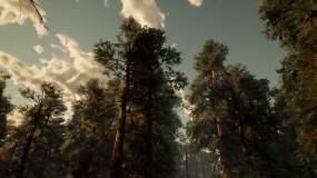 原创制作原始森林秋季红杉树林视频素材
