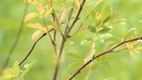 4K春天新叶绿叶嫩叶树木视频素材
