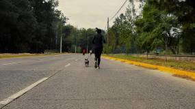 周末女孩跑步遛狗视频素材