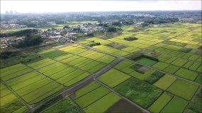航拍江汉平原水稻成熟广告宣传视频素材