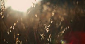 阳光草丛视频素材