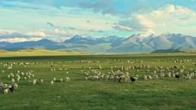 草原羊群4K素材视频素材