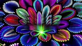 多彩绚丽花朵视频素材