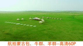航拍蒙古包、牛群、羊群高清60P视频素材
