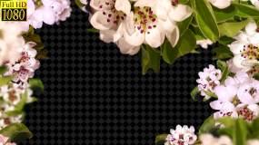 鲜花花框花朵视频素材包