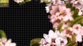 鲜花花框视频素材包
