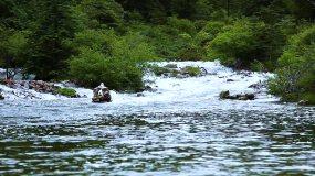 山水原始森林虫鸣鸟叫视频素材