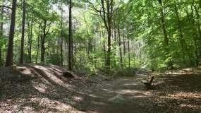 树木茂盛的的森林视频素材