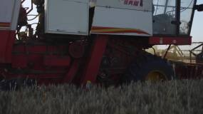 实拍收割小麦视频素材
