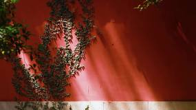 立秋时节的气候拍摄视频素材