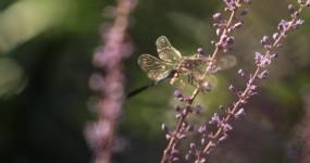 灵谷寺细节美景蜻蜓视频素材