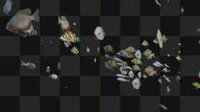鱼群8号_4(有Alpha通道)视频素材包
