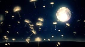 4K蒲公英夜黑风高月夜星空夜色视频视频素材