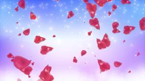 4K玫瑰花瓣背景循环视频素材