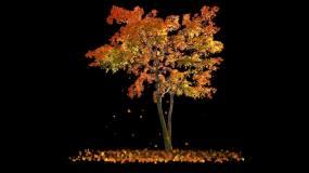 秋天枫树-无缝循环带透明通道视频素材