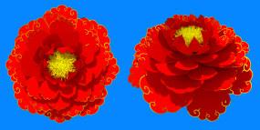 牡丹花开蓝幕抠像动态视频素材