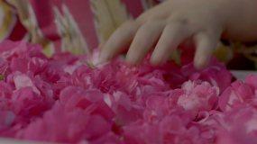 新疆和田玫瑰采摘视频素材
