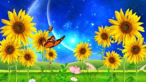 星空下的向日葵花梦幻唯美舞台背景视频素材