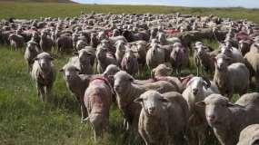 秋天的草原延时羊群蓝天白云视频素材