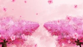唯美粉红樱花飘落林荫道推进LED视频视频素材