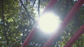 4k深圳教育透过树叶的阳光和小片绿叶视频素材包