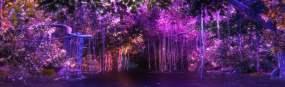 循环素材森林梦幻森林炫丽视频素材
