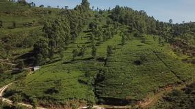 斯里兰卡茶山视频素材