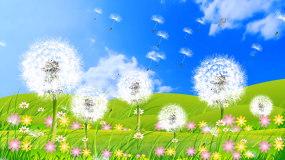 唯美蓝天白云大自然蒲公英背景视频视频素材