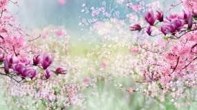 春暖花开视频素材