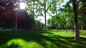 4K早晨公园通州森林公园河畔绿色视频素材