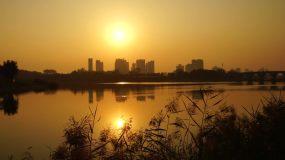 【4K】城市日出延时太阳芦苇河边视频素材