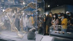 疫情中周口店北京猿人博物馆视频素材